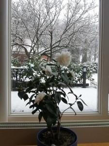 zhang-wilhelm-snow2