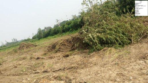 土地、一丛杂树