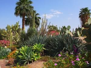隱該地吉布茲的熱帶植物園1