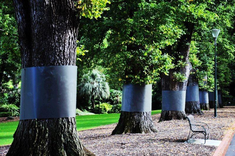 公园里用白铁皮包裹的大树