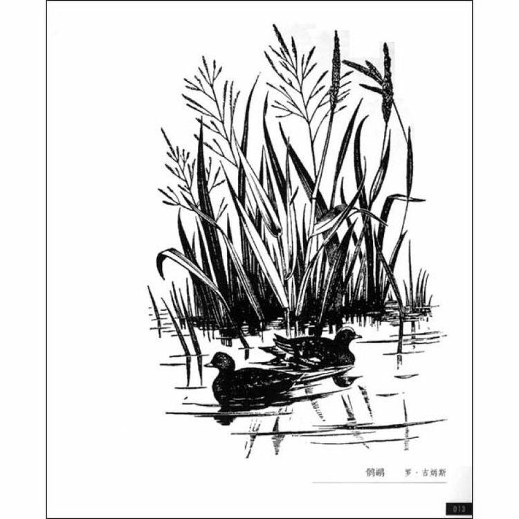 鸳鸯、水草