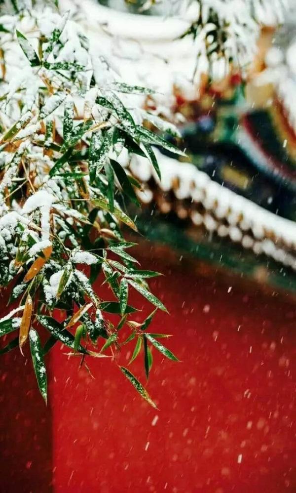 故宫春雪2