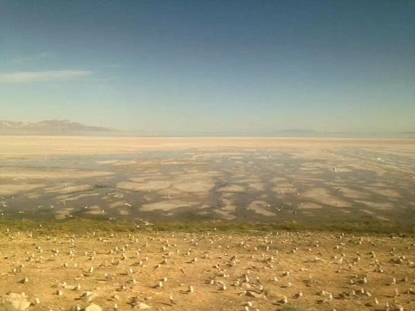从盐湖城开出来,湖边有许多白鸟