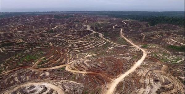 被砍伐的雨林