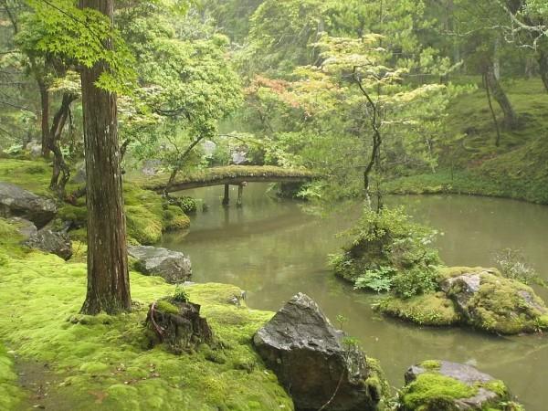 西芳寺的青苔