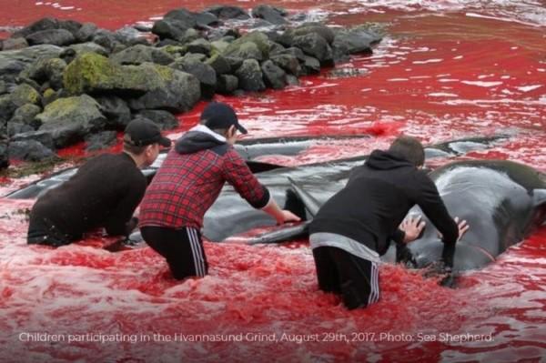 参与杀鲸活动的半大孩子